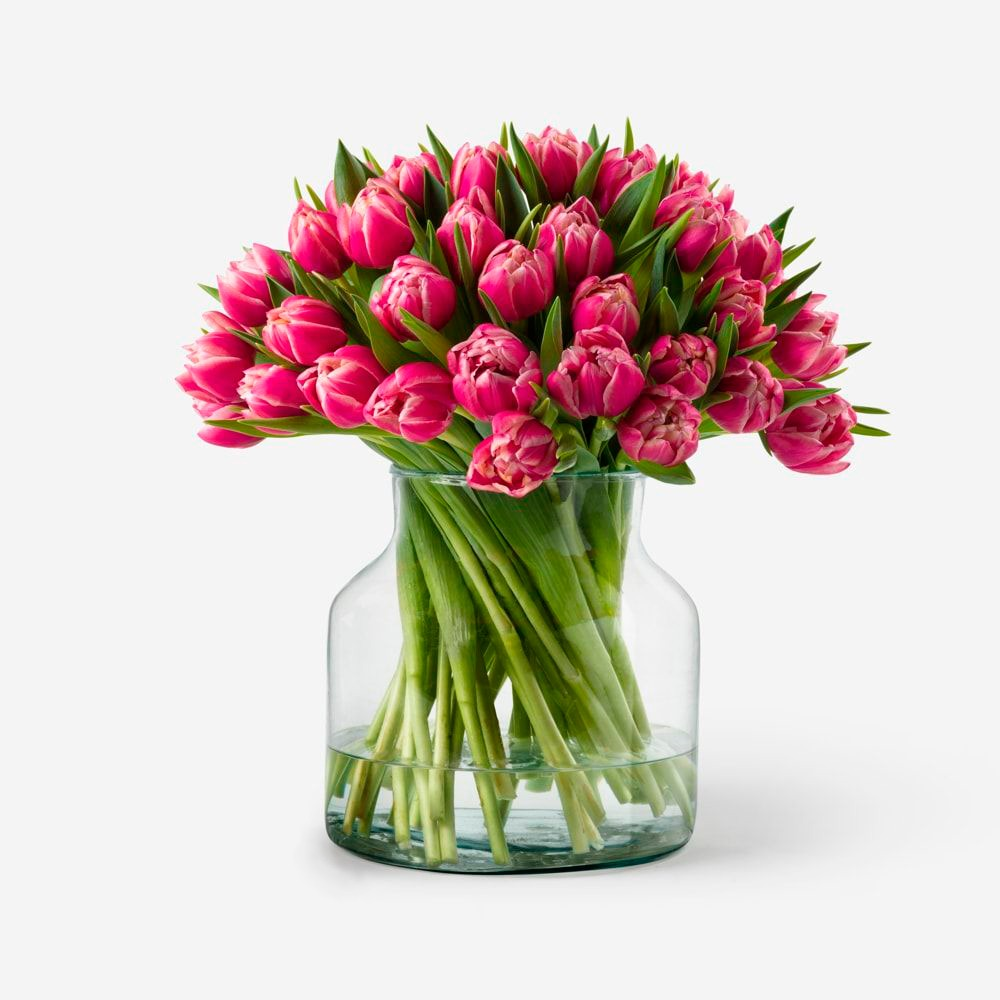 tulipanes fuccia naturales