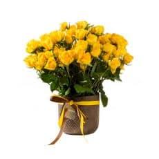 ramo de rosas mini amarillo