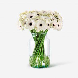 ramo de gerberas blancos, flores de gerbera blanco