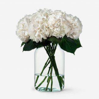 ramo de hortensias blancos a domicilio, envío de hortensias naturales Madrid, hortensias blancos online
