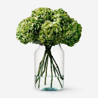 ramo de hortensias verdes, envío de hortensias Madrid, hortensias verdes naturales