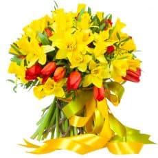 narcisos amarillos con tulipanes rojos