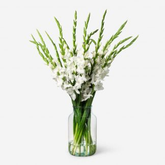 ramo de gladiolos blancos