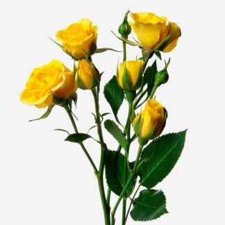 rosas de pitimini a domicilio, mini rosas amarillos Madrid, envío de ramo de rosas mini