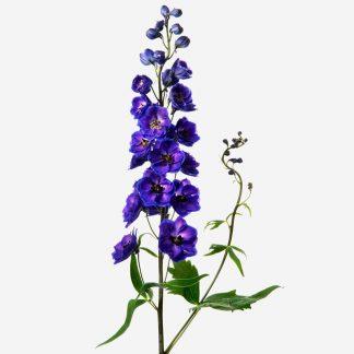 Flores naturales de delphinium violetas, ramos personalizados de delphinium violeta, envío de flores naturales Madrid