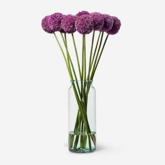 ramo de allium a domicilio, flor de allium Madrid, envío de allium mismo día