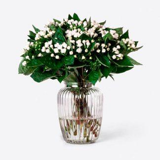 Envío de ramo de bouvardia blanco a domicilio, bouvardia natural Madrid, Flores de bouvardia para regalar