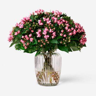 ramo de bouvardia rosado, flores de bouvardía natural rosado, envío de ramo de bouvardia Madrid