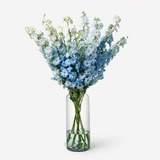 ramo de delphinium azul a domicilio, delphinium natural a domicilio Madrid