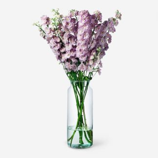 Envío de ramo de delphinium rosado, ramos de delphinium naturales Madrid, flores de delphinium rosado