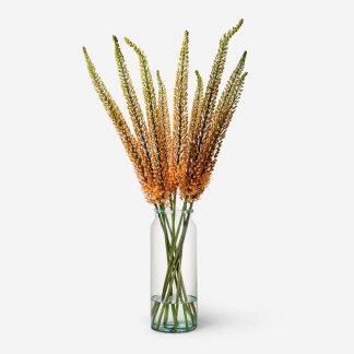 ramos y flores de eremurus, flor cola de zorro Madrid, envío de flor cola de zorro